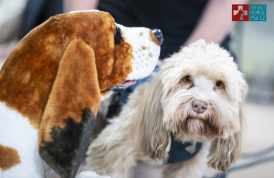 První pomoc pro psy