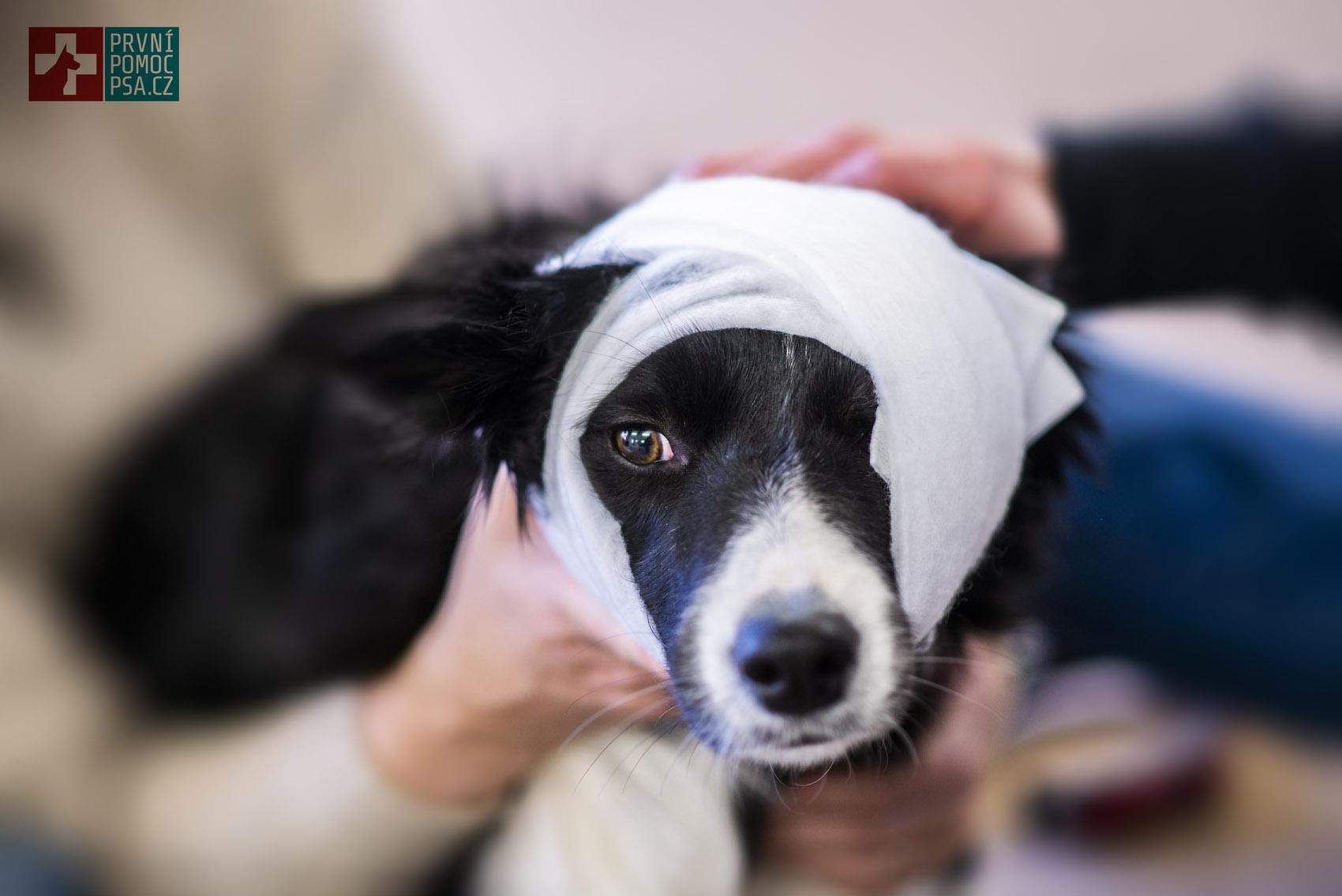pes_si_zranil_oko