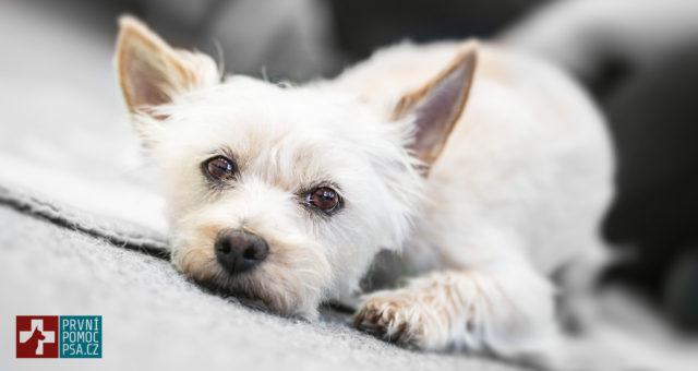 Čipování psů– je čeho se obávat?