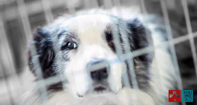 Jak zajistit psa v autě?