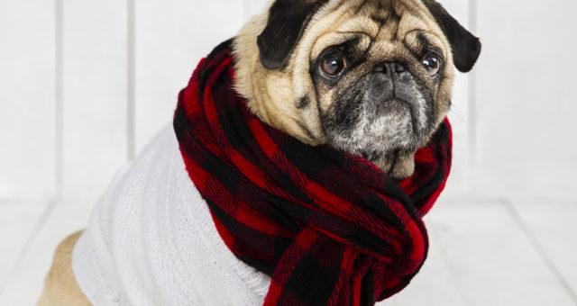 Péče o psa v zimním období