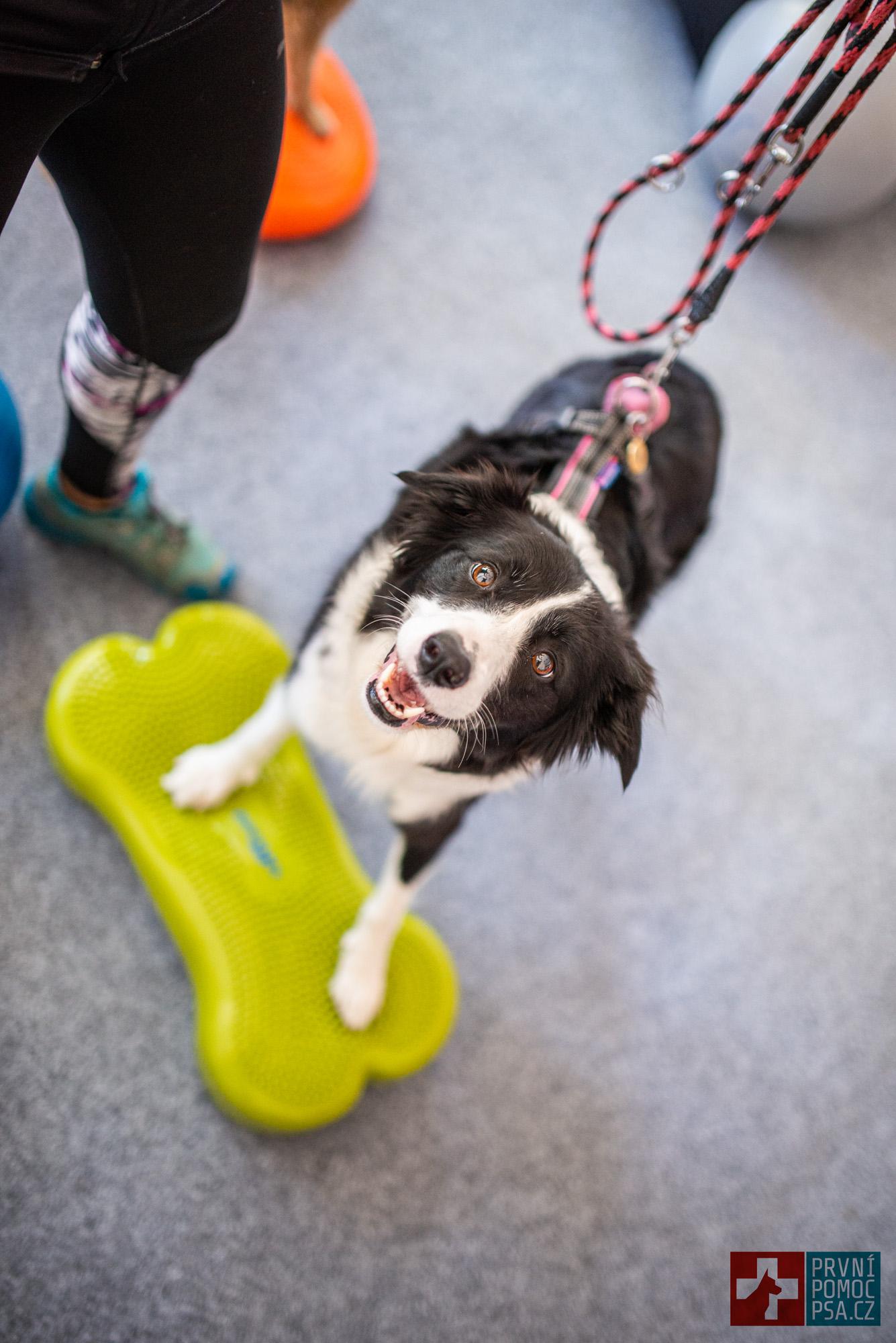 domaci_psí_fitness