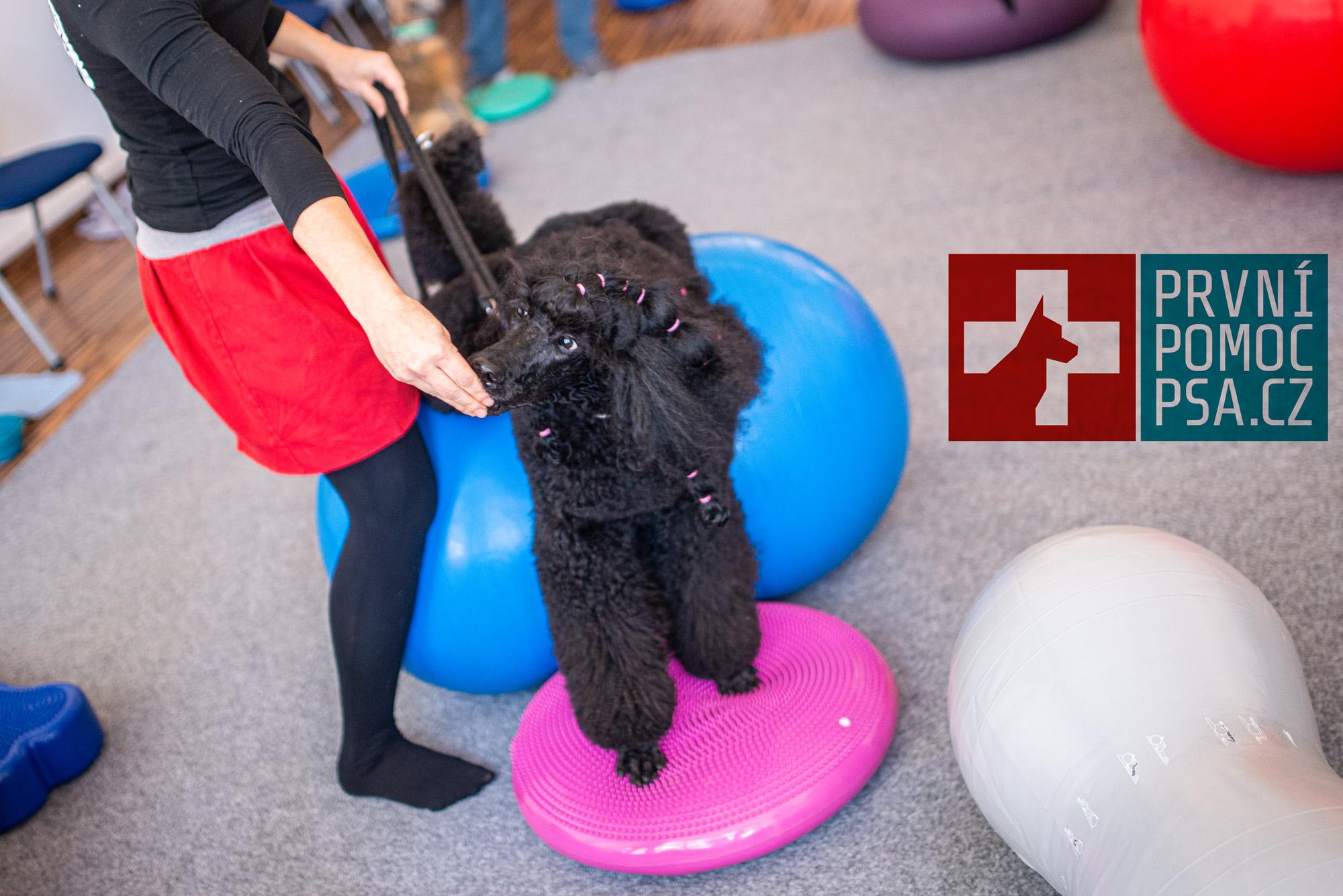 Domácí psí fitness